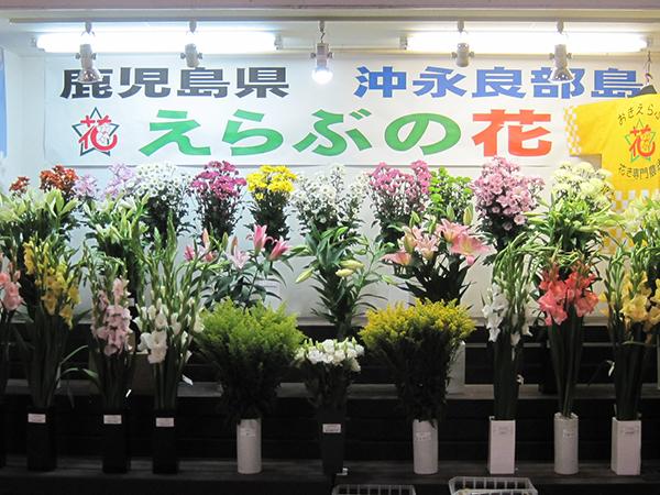 えらぶの花の展示 | 福岡県花卉...